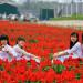 A group of young girl prepares Ao Dai for posing photos.
