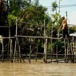 A monkey bridge, a typical bridge made of some single lodge in Mekong Delta Vietnam