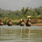 Elephant Park Project - Luang Prabang