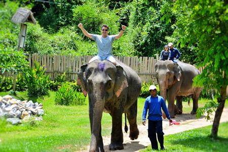 Elephant Park Project