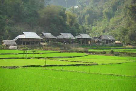 Homestay in Van village