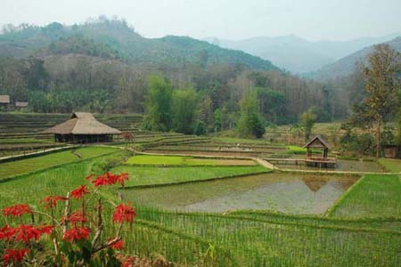Kamu Lodge Village