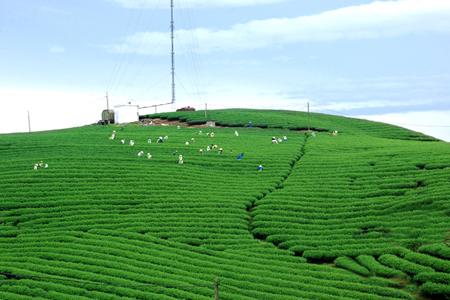 Moc Chau Plateau