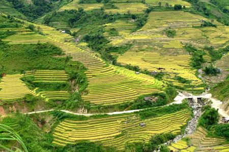 Phong Tho - Vietnam